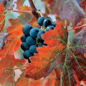 Les propriétés viticoles à Rians
